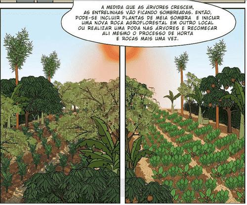 các cây trồng được trồng theo luống trong canh tác nông nghiệp sinh thái vườn rừng