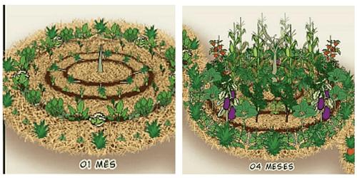quần đảo cây trồng