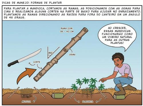 cắt cành để ươm trong nông nghiệp sinh thái