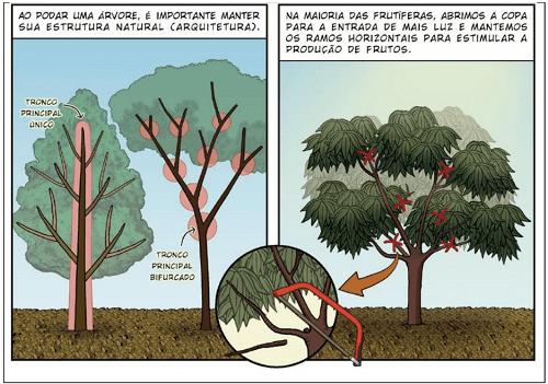 cắt tỉa trong canh tác vườn rừng