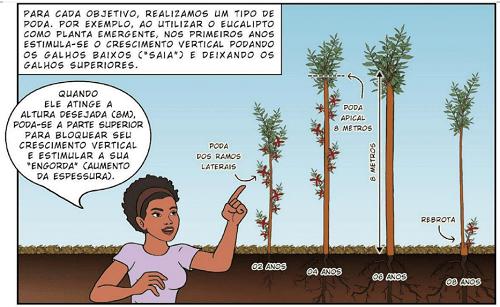 Trồng bạch đàn trong canh tác nông nghiệp sinh thái