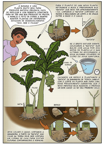 mẹo xử lý cây chuối trong canh tác nông nghiệp sinh thái