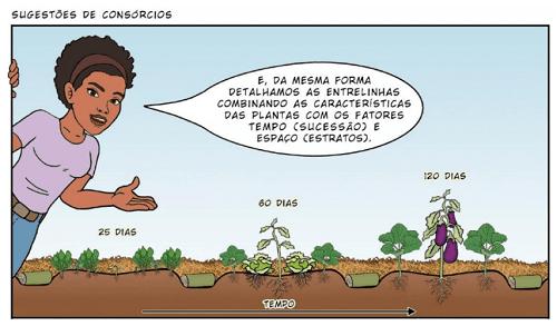 Kết hợp cây trồng trong canh tác nông nghiệp sinh thái