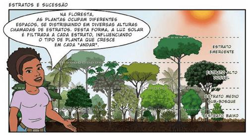 trong nông nghiệp sinh thái vườn rừng các cây trồng phát triển theo từng tầng