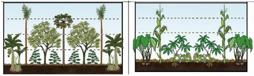 Hệ thống nông lâm kết hợp