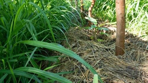 Bề mặt của đất nên luôn luôn được bao phủ bởi một lớp hữu cơ tự nhiên