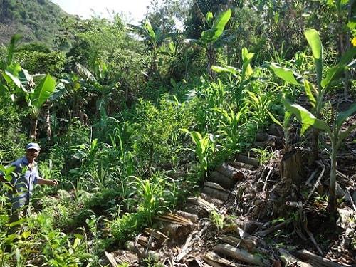 Thừa kế hay tiếp nối tự nhiên là một nguyên tắc bắt buộc trong Nông nghiệp rừng sinh thái tự nhiên