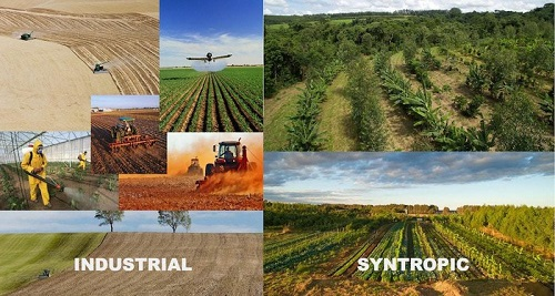 Phương pháp Syntropic Agriculture  của Ernst