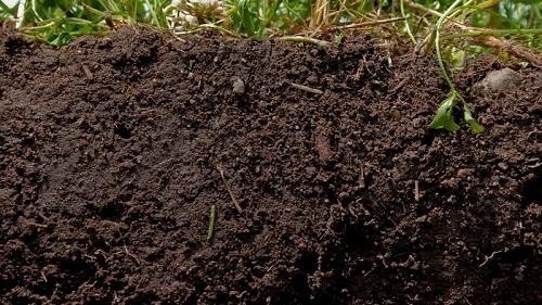 phương thức nông nghiệp sinh thái của Claude là không cày xới, phủ mặt bằng thảm thực vật