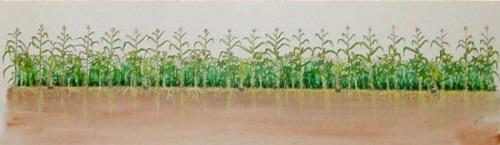 hình minh họa cho hệ thống nông nghiệp rừng sinh thái: các loại cây bụi và rau màu