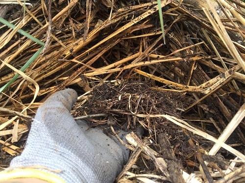 Khi che phủ lên mặt đất sẽ giúp cải tạo, nâng cao chất lượng đất mặt.