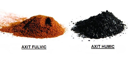 Axit humic