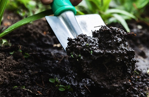 Để cải thiện độ màu mỡ của đất một cách nhanh nhất là bổ sung humate (chất humic được khai thác từ mỏ)