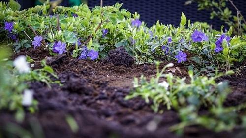 Đất được nâng cao độ phì nhiêu khi canh tác hữu cơ