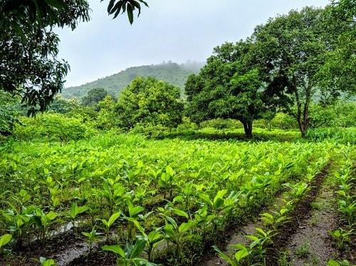 Trong sản xuất hữu cơ cần đa dạng hóa cây trồng