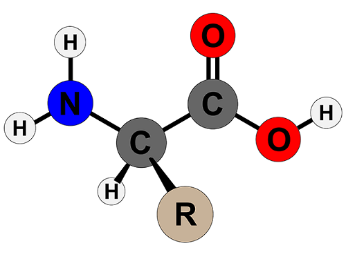 cấu tạo của amino acid