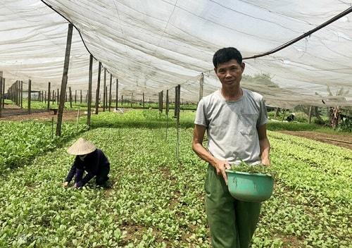 Ông Đạo là một nông dân vật lộn hàng năm trời để sản xuất rau sạch