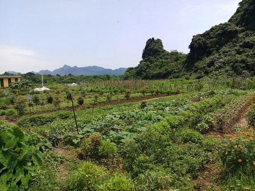 Đa dạng cây trồng trong vườn