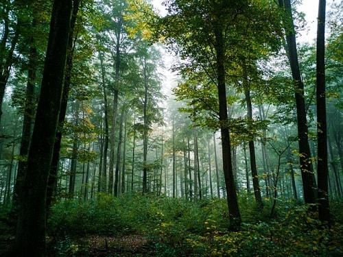 Nông nghiệp hữu cơ dựa theo chu trình phát triển của rừng tự nhiên