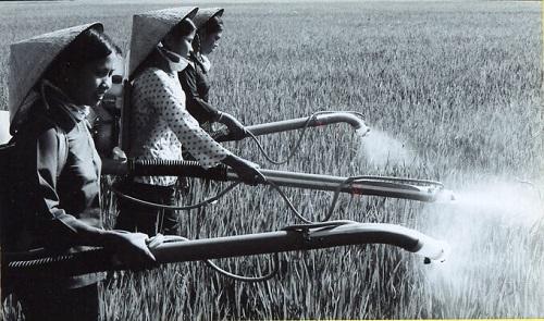 Thuốc bảo vệ thực vật xuất hiện trên cánh đồng Việt Nam từ 1957