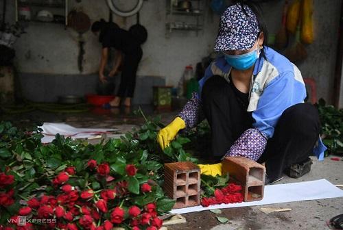 Hoa vùng Mê Linh ngấm thuốc bảo vệ thực vật
