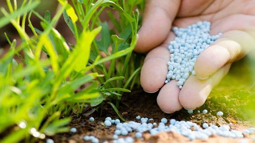 Bón nhiều phân vô cơ làm đất chai cứng