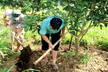 cải tạo đất trước khi thúc ra hóa, ra đọt