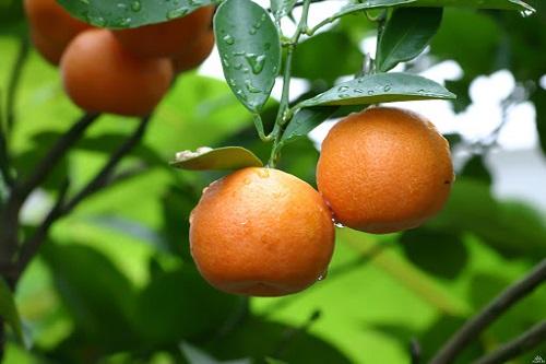 các yếu tố ngoại cảnh như nhiệt độ, độ ẩm, ánh sáng, thời tiết,.. ảnh hưởng đến sự hấp thu dinh dưỡng qua lá