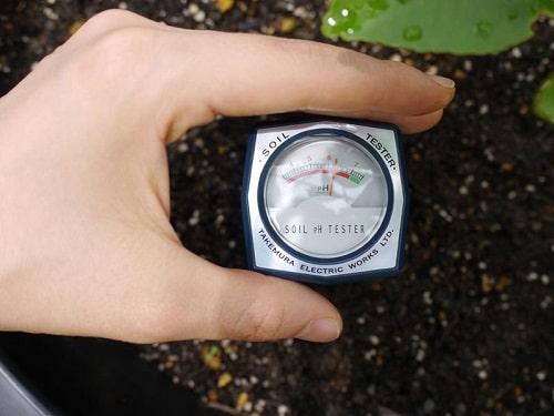 pH đất trồng liên quan đến các dịch hại trong đất