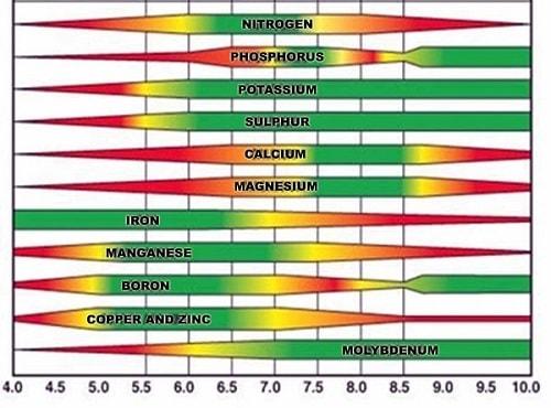 pH quyết định đến độ tan của dinh dưỡng trong đất