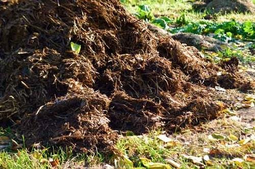Trước khi đưa phân hữu cơ ra sử dụng cần phải ủ hoai hoặc bán hoai để loại bỏ mầm bệnh trong phân