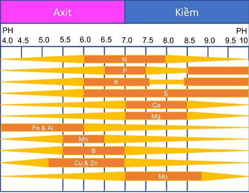 Tác động của độ pH đất thấp đến dinh dưỡng trong đất