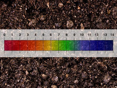 Độ pH thấp ảnh hưởng như thế nào đến dinh dưỡng trong đất