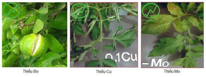 cách bổ sung dinh dưỡng cho cây trồng