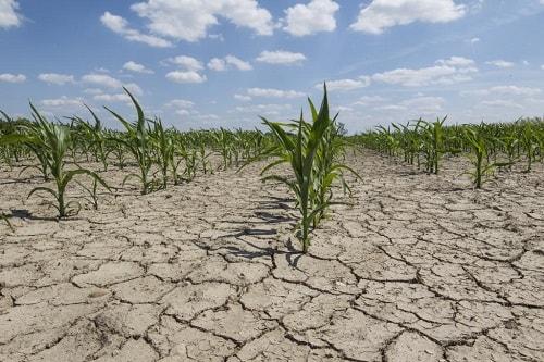 đất không được che phủ sẽ suy thoái