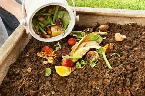 Dùng rau củ dư thừa làm phân bón là một ý tưởng cực tốt