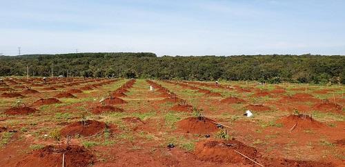 cải tạo đất ở vườn Nhật Hùng 2