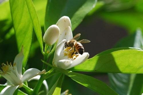 Ong là loài côn trùng đặc biệt, mang lại giá trị rất lớn cho con người và tự nhiên