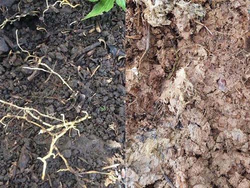 so sánh đất tốt đất xấu