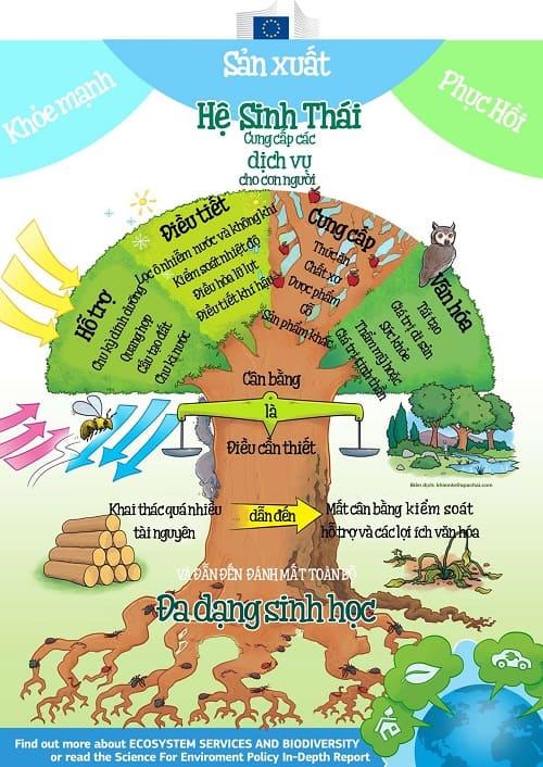 mối liên quan của hệ sinh thái đến sự đa dạng sinh học