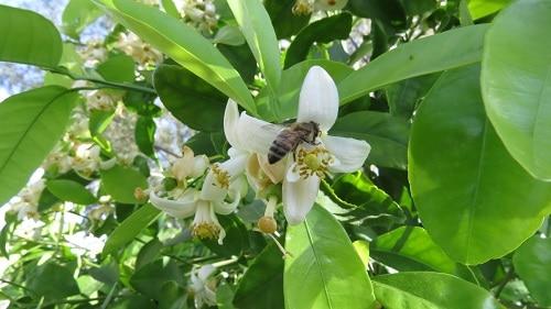 ong là sinh vật không thể thiếu trong canh tác nông nghiệp