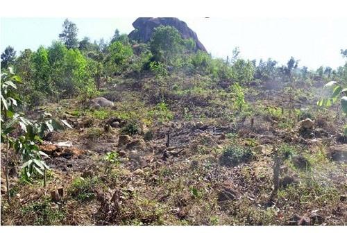 đất đồi trơ sỏi đá trước khi được cải tạo
