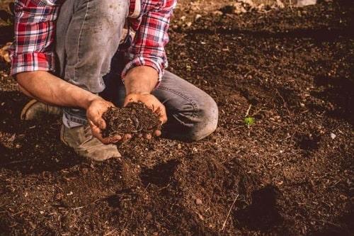Đất mùn được xem là loại đất lý tưởng để trồng cây