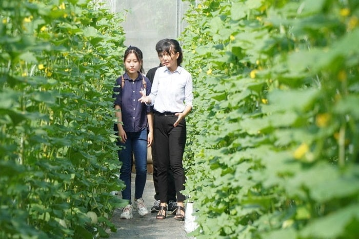 Các bạn sinh viên rất hào hứng được trải nghiệm thực tế tại vườn nông sản công nghệ cao của chị Hiền