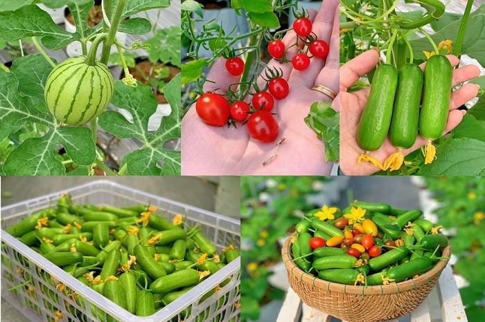 Các loại nông sản từ khu vườn của chị Hiền