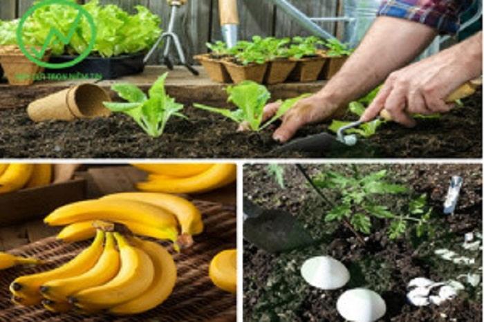 Phân bón đậu tương trứng chuối có rất nhiều công dụng đối với cây trồng