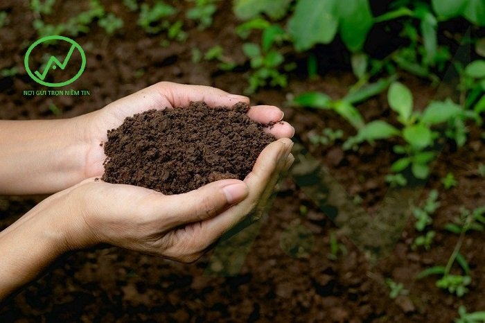 Sử dụng phân hữu cơ giúp đất tơi xốp và tăng độ phì nhiêu