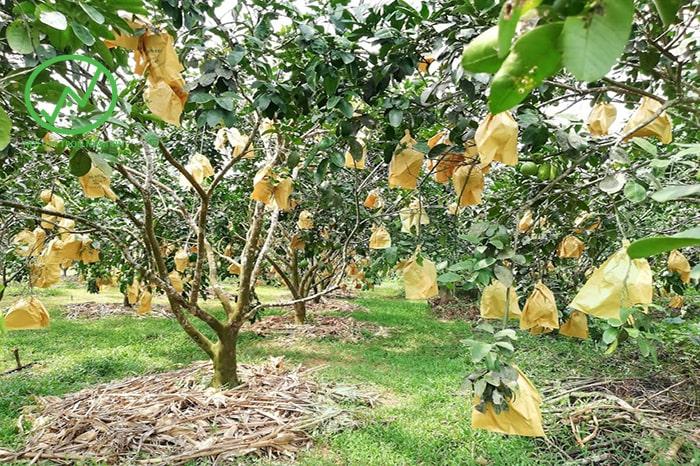 sử dụng vật liệu hữu cơ che phủ là biện pháp chăm sóc cây ngày nắng nóng