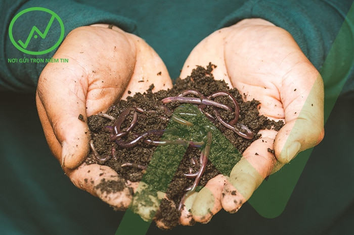 Cách kiểm tra mật độ giun đất trong đất