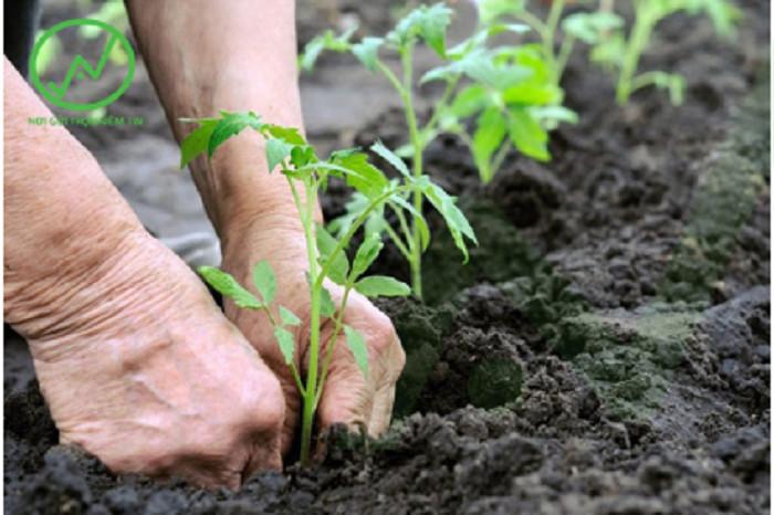 Bổ sung hữu cơ cho đất